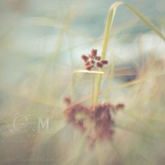 Nobody can teach me who I am... by Carmen Moreno Photography (BUSY), via Flickr  @Lensbaby