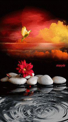 Анимация Желтый голубь машет крыльями над красным цветком, лежащем на белых камнях у водоворота, maryla