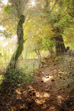 Senderismo entre castaños en la Sierra de Aracena (Huelva) / Hiking between chestnut trees in the Sierra de Aracena (Huelva), by @jesfarma