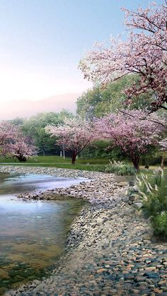Cherry blossom trees in bloom. Outdoor Photography, Nature Photography, Photography Tips, Landscape Art, Landscape Paintings, Beautiful World, Beautiful Places, Beautiful Scenery, Spring Scenery