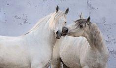 BEST FRIENDS Photo by Ekaterina Druz
