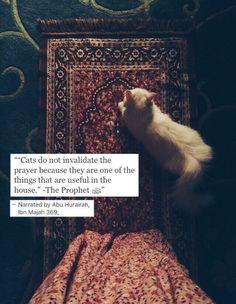 Quotes god islam prophet muhammad 37 ideas for 2019 Prophet Muhammad Quotes, Hadith Quotes, Muslim Quotes, Religious Quotes, Islamic Qoutes, Islam Hadith, Allah Islam, Islam Quran, Alhamdulillah