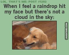 When I feel a raindrop hit my face. #funnypictures#lmao #lol #funnygif