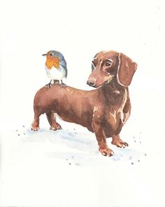 doxie with a bird
