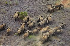 Stunning views of African wildlife and scenery from a £65,000 helicopter safari | Mail Online