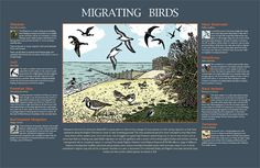 Migrating Birds created for Selsey Council