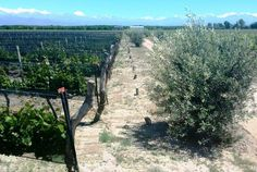 Bodega #Margot (Tupungato, #Mendoza)