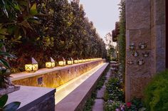 Supposedly dwarf Little Gem Magnolias can grow in very narrow environments like the one pictured. Mediterranean Landscape by Pool Environments, Inc.