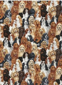 Can you ever have too many Cocker Spaniels?