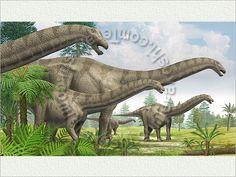 Apatosaurus: Marching family across the green field, Dinosaur, Dinosaurus, Sauropod Dinosaur Life, Pre History, Green Fields, Prehistoric Animals, Color Theory, Botany, Reptiles, Monsters, Empire