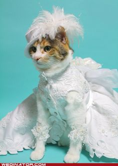 cats in cat-sized wedding dresses.