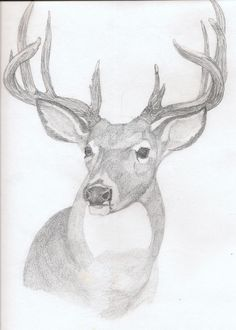 deer drawings in pencil | Art: Deer Rough sketch in pencil