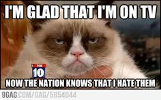 Oh grumpy cat...you so funny