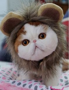 Cat Costume,EXPAWLORER, Funny Lion Mane Wig for Party Dress Up, Small Dogs with Bell Charm >>> Don't get left behind, see this great cat product : Christmas for Cats
