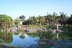 Palmetum de Santa CruzFamilias botánicas más representadas: Arecaceae: (404 taxones), Bromeliaceae (89), Cactaceae (31), Agavaceae (26), Moraceae (27), Pandanaceae (10), Mimosaceae (14), Zamiaceae (12) Géneros más representados de palmeras (Arecaceae): Coccothrinax (43 taxones), Dypsis (21), Chamaedorea (18), Livistona (14), Pritchardia (12), Syagrus (12), Copernicia (11), Arenga (10).