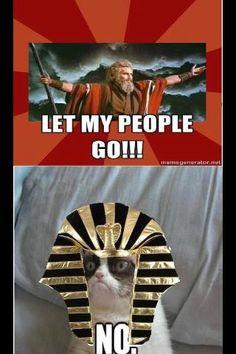 Moses meets Pharaoh Tard the Grumpy Cat | #Tard #GrumpyCat