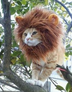 cat costumes - Japan-based Pet Office is a company that specializes in creating pet costumes and accessories. The company's extensive collection of cat costumes f. I Love Cats, Cute Cats, Funny Cats, Funny Lion, Baby Animals, Funny Animals, Cute Animals, Wild Animals, Funniest Animals