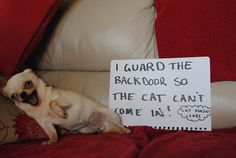 OMG--never mind the sign, look at that FACE!!
