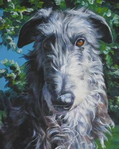 Scottish Deerhound portrait CANVAS print of LA by TheDogLover