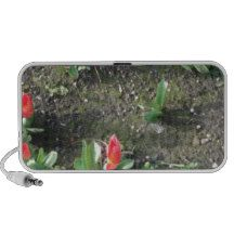 sweet little red spring tulip flowers in the park mini speaker http://www.zazzle.com/sweet_little_red_spring_flowers_in_the_park_speaker-166706382272022631?rf=238290304201005220&tc=pifa add your own text!