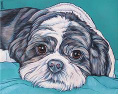 daisy patch shih tzu shihtzu custom charcoal pencil shih tzu drawing your dog 1167