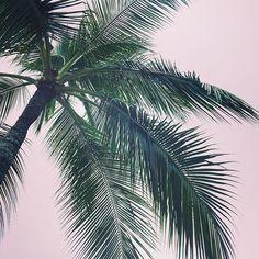 PALM TREE DREAMIN | #atelierlane #plantsonpink #bali #holiday #designer #design #interiordesign #interiors