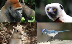 There are many scientists who study the mental abilities of animals. As intelligent animals ourselves, we're keen to learn whether other species share our skills, and how our vaunted smarts evolved…