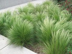 Beautiful ideas for landscaping with ornamental grasses used as an informal grass hedge, mass planted in the garden, or mixed with other shrubs and plants. #LandscapeFrontYard