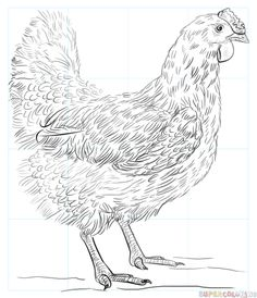 How to draw a chicken step by step. Drawing tutorials for kids and beginners.