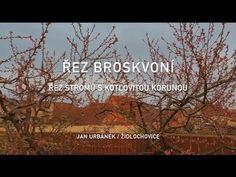 Řez broskvoní - řez stromů s kotlovitou korunou (2. díl) - YouTube Youtube, Artwork, Gardens, Work Of Art, Auguste Rodin Artwork, Outdoor Gardens, Artworks, Youtubers, Illustrators