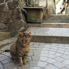 今日も猫いました#尾道ねこ歩き #尾道ネコ歩き #尾道猫 by azukki