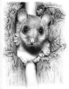 """""""Mouse"""" by Alexander Levett on Deviant Art  (Mixed pencils on Strathmore Bristol paper."""