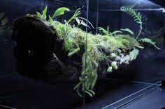 Branch vivarium - Update | gnat repellent: nematodes?