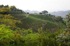 Plantage Thailand Mae hong son