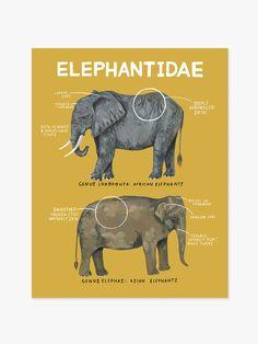 Elephantidae print