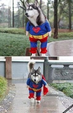 Demotivateur.fr | Superdog