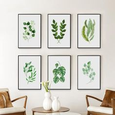 'Botanica' Watercolour Series - Canvas art prints