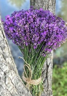 French Lavender, Lavender Blue, Lavender Fields, Lavender Flowers, Lilac, Purple, Lavender Decor, Lavender Scent, Beautiful Flowers Pictures