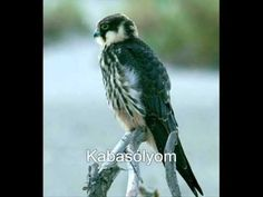 Ragadozó madarak és hangjuk 2 Pets, Youtube, Animals, Animales, Animaux, Animal, Animais, Youtubers, Youtube Movies