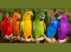 Rainbow of colors - birds, blue, green, orange, parrots, purple, red, yellow