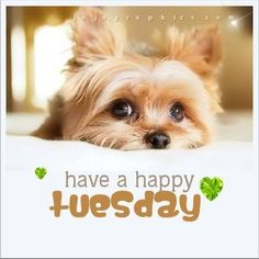 Check out the Tuesday Spa Specials offered at Santa Barbara Le Reve Organic Spa Boutique available today only from to Call for details Tuesday Meme, Happy Tuesday Quotes, Happy Quotes, Happy Tuesday Morning, Emo Quotes, Happy Thursday, Work Quotes, Its Tuesday, Happy Weekend