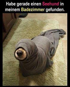 Seehund im Badezimmer :)