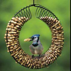 Slinky kid's bird feeder