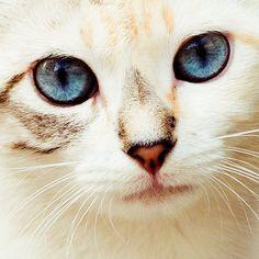 778: Синий глазами Kitty | Flickr - Photo Sharing!  На наш центре IT / визуальной закладки # 3750893
