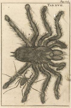 Jan Luyken | Spinnen XVII, Jan Luyken, Jan Claesz ten Hoorn, 1680 | Prent midden- en rechtsboven gemerkt: Tab. XVII. Pag: 128.