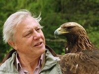 S'il possédait une arche de Noé, David Attenborough sauverait ces dix espèces!