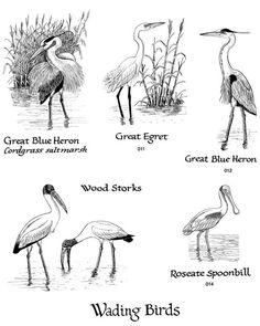 Wetlands Plants And Animals