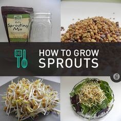 Sprouts: They're crunchy, they're packed with nutrients, they're entirely delicious—and you can grow them yourself in a matter of days. Add homegrown pizzazz to salads and sandwiches in these eight easy steps!