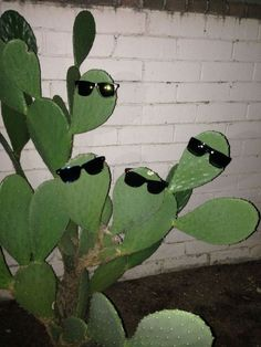 haha, this kind of makes me want a cactus. Photo Wall Collage, Picture Wall, Aesthetic Photo, Aesthetic Pictures, Aesthetic Green, Magazine Nature, Green Photo, Photocollage, Cursed Images