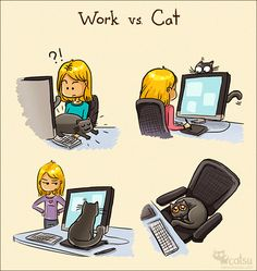 About work | Catsu The Cat